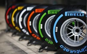 Картинка покрышки, шины, резина, Pirelli, bus, Tyers