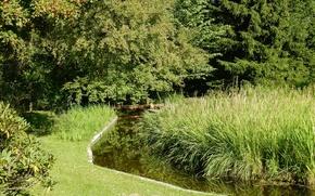 Картинка трава, деревья, природа, ручей, дерево, widescreen, обои, wallpaper, широкоформатные, background, обои на рабочий стол, полноэкранные, …