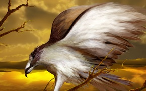 Обои птица, орел, рисунок, крылья