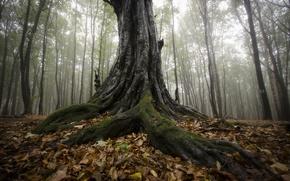 Картинка осень, лес, туман, дерево