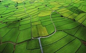 Картинка green, apple, wide, field, structure