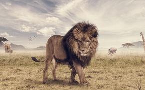 Картинка животное, слон, лев, жираф, саванна, носорог, photoshop, The Lion King, Animal, Joshua Amenyo