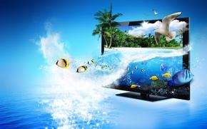 Картинка море, рыбы, блики, пальмы, чайки, монитор