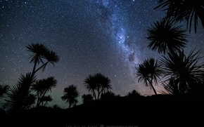 Картинка небо, звезды, ночь, пальмы, метеор, photographer, Mark Gee