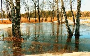 Картинка лёд, весна, ice, берёзы, sunny day, spring, birch, Март, Солнечный день, March, Сибирь, Siberia