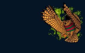 Картинка фон, сова, птица, Фредди Крюгер, Freddy Krueger