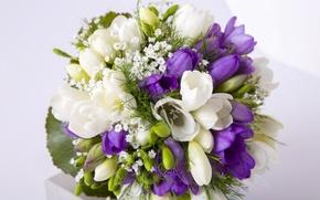 Картинка букет, белая, фиолетовая, фрезия, Bouquets, Freesia