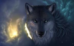 Обои взгляд, свет, порезы, волк, морда, звезды, облака