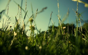 Картинка макро, зелень, поле, природа, лето, трава, газон