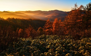 Обои утро, горы, туман, пейзаж