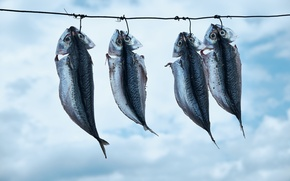 Картинка фон, еда, рыба