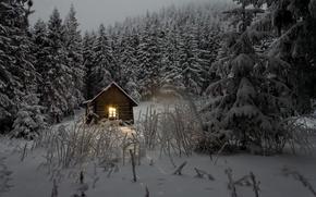 Обои зима, лес, свет, снег, деревья, домик, сумерки