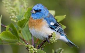 Картинка листья, природа, птица, цвет, перья