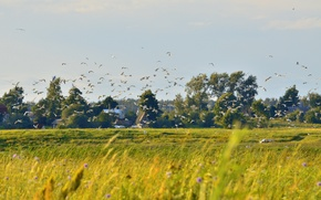 Картинка поле, лето, трава, солнце, пейзаж, цветы, птицы, природа, река, тепло, чайки, прогулка, псков, река великая