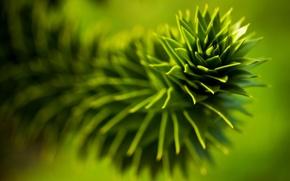 Картинка листья, растение