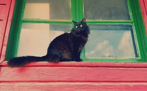 Картинка кошка, кот, взгляд, кошак, окно, пушистая