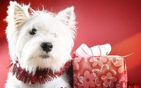 Картинка шарики, украшения, праздник, собака, Новый Год, Рождество, Christmas, New Year