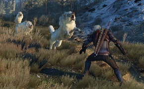 Картинка Wolves, The Witcher, White, Wolf, Medieval, The Witcher 3, Wild Hunt, Geralt, Wolf Pack, White …