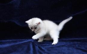 Картинка кошка, кот, котенок