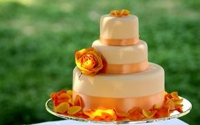 Обои сладости, торт, лента, десерт, цветок, роза, вкусно, большой, лепестки, еда, оранжевый, ленточка, желтый