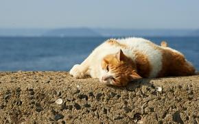 Обои лежит, кошак, отдых, кот