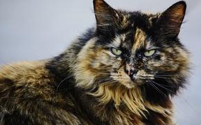 Картинка глаза, кошак, котяра, котэ