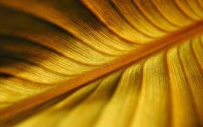 Картинка желтый, природа, лист, nature, yellow, leaf