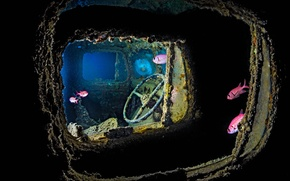 Картинка рыбы, Красное море, дайвинг, Тистлегорм, затонувший сухогруз