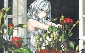 Картинка цветы, розы, Девушка, окно