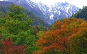 Обои осень, лес, горы, природа, Япония