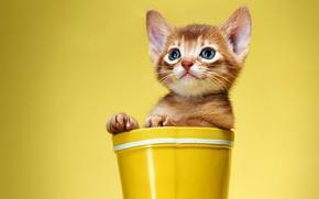 Картинка кошка, желтый, котенок, фон, рыжий, сапог