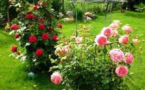Картинка зелень, трава, цветы, розы, сад, красные, розовые, кусты