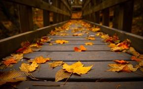 Картинка осень, макро, дерево, листва, мостик