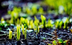 Картинка зелень, макро, зеленый, фон, земля, widescreen, обои, растение, росток, wallpaper, широкоформатные, background, macro, полноэкранные, HD …