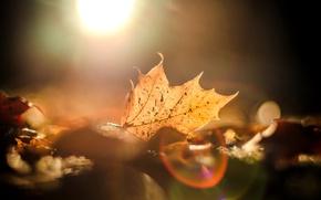 Картинка осень, листья, солнце, макро, блики, фон, widescreen, обои, размытие, wallpaper, листочки, широкоформатные, background, полноэкранные, HD …