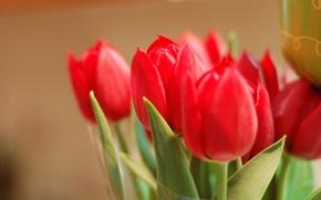 Картинка листья, макро, цветы, фон, widescreen, обои, лепестки, бутон, тюльпаны, красные, wallpaper, red, rose, листочки, цветочки, ...