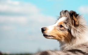 Картинка небо, друг, собака