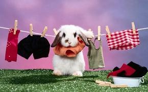 Обои сушится, Кролик, белье