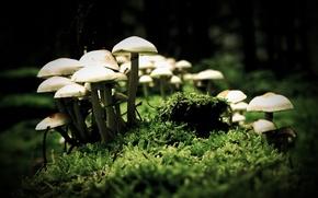 Обои макро, грибы