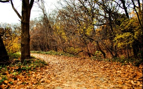Картинка осень, листва, дорожка, Nature, autumn, leaves, path, fall