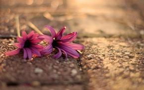 Картинка цветы, flowers, широкоэкранные, асфальт, размытие, HD wallpapers, обои, boceh, полноэкранные, flower, background, fullscreen, макро, широкоформатные, ...
