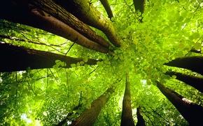 Картинка небо, листья, свет, деревья, ствол, крона