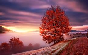 Картинка горы, Карпаты, туман, Украина, рассвет, осень