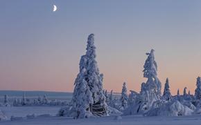 Картинка зима, снег, деревья, Швеция, Sweden, Lapland, Лапландия, Вестерботтен, Vasterbotten, Gitsfjällets Nature Reserve