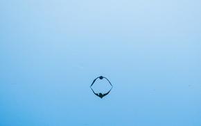 Обои минимализм, вода, птица