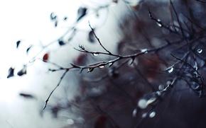 Картинка капли, макро, ветки, фото, фон, дождь, ветви, обои, размытость, фокусировка