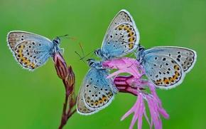Картинка цветок, природа, бабочка, мотылек