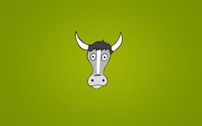 Обои голова, животное, минимализм, глазастая, корова, рога, зеленый фон