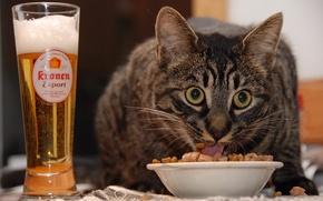 Обои кот, еда, пиво