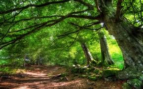 Картинка дорога, лето, деревья, природа
